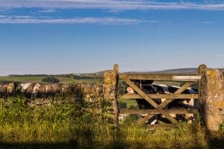 Cow & Gate Den Heffernon