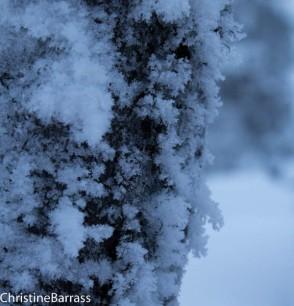 Icy tree-detail. Finland Christine Barrass