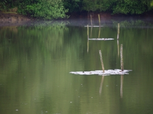 Langmere Lakes, Norfolk Stephen Gates ARPS