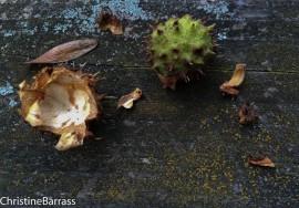 Nature Christine Barrass