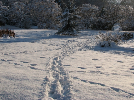 Snow Tracks Margaret Stredwick