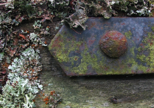 Lichen and rust Margaret Stredwick