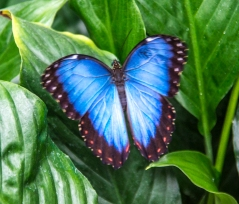 Butterfly Susan Grimes