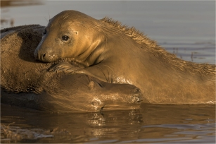 Mother and Pup at Sunrise Jim Berkshire
