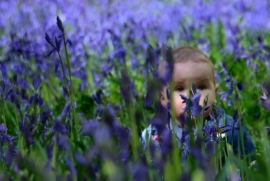 Hiding in the bluebells by Margaret Stredwick