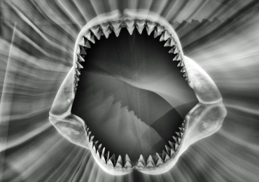 Teeth by Dave Harris LRPS