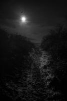 The Path by Jose Souto
