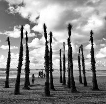 Giant Trees in Tel Aviv Beach by Limor Tevet