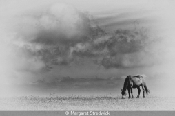 Lone Horse by Margaret Stredwick