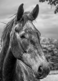 The Horses Head by Susan Grimes