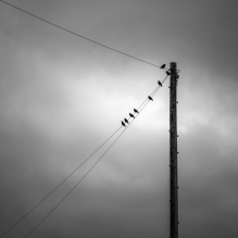 The birds have not flown by Jose Souto