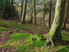 Beech woodland by Stephen Gates ARPS
