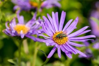 Feeding Fly by Robert Williams