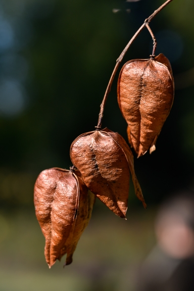 Seed Pods by Jeff Royce