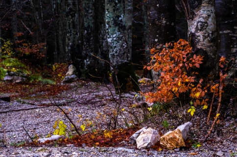 Autumn by the wood by John McCarthy LRPS
