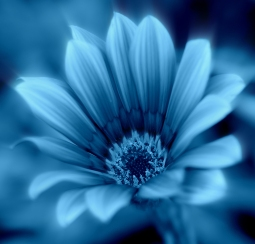 Blooming Blue by Margaret Stredwick