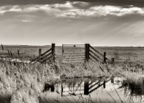 The Open Gate by Susan Grimes