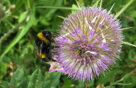 Pollen Shower by Christine Barrass