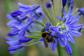 Busy Bee by Den Heffernon