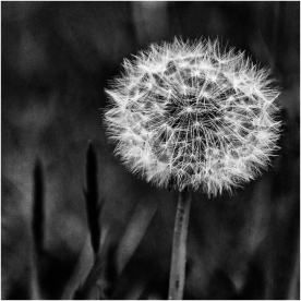 Gone to Seed by Den Heffernon