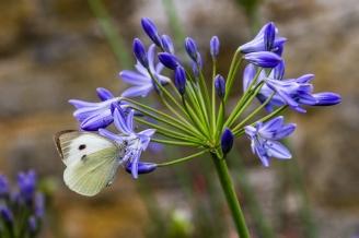 White on Blue by Den Heffernon