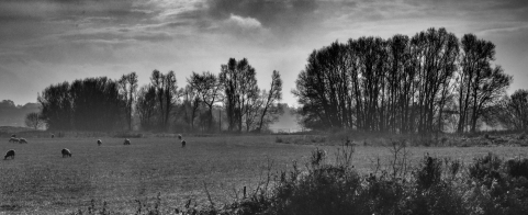 Stour Valley, Winter by Jeff Royce