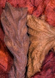 Autumn Colours by Jim Berkshire