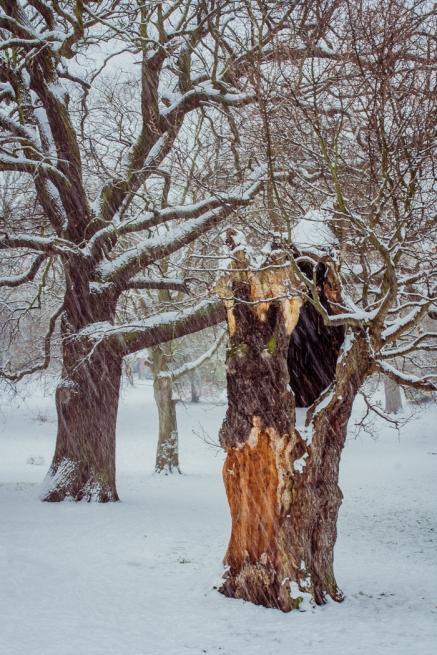 Winter Trees by Den Heffernon