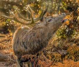 Ready to Rut by Susan Grimes