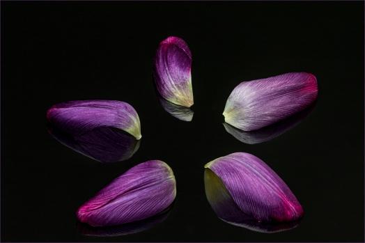 Purple Star by Jim Berkshire