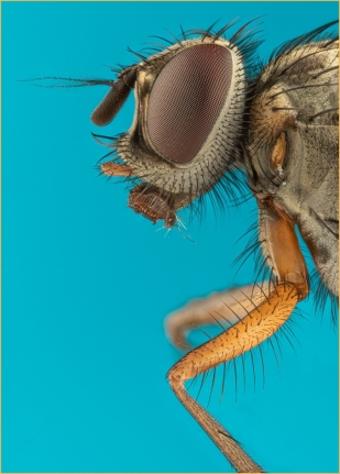 Extreme Macro House Fly by Jim Berkshire