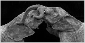 Elephants' Playtime by Susan Grimes