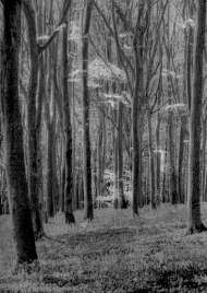 Into the Forest by Susan Grimes