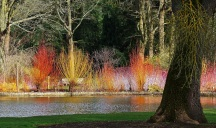 Winter at Wisley by Stephen Gates ARPS