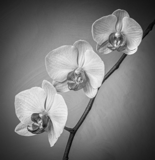 Orchids by Jim Berkshire