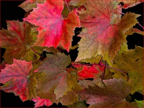 Autumn Leaves by Dave Harris LRPS
