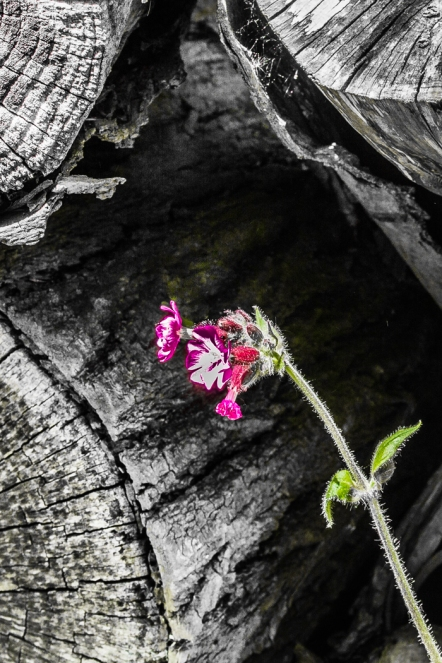 Hidden Gem by Den Heffernon