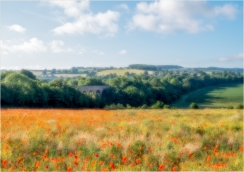 View from the Poppy Field by Susan Grimes