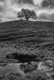 Burrow Hill by Robert Williams