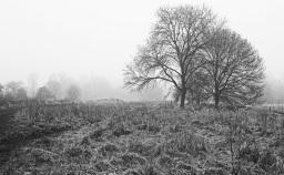 Footscray Meadows by Stephen Gates ARPS