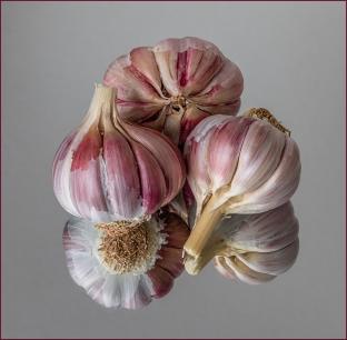Garlic Reflection by Jim Berkshire